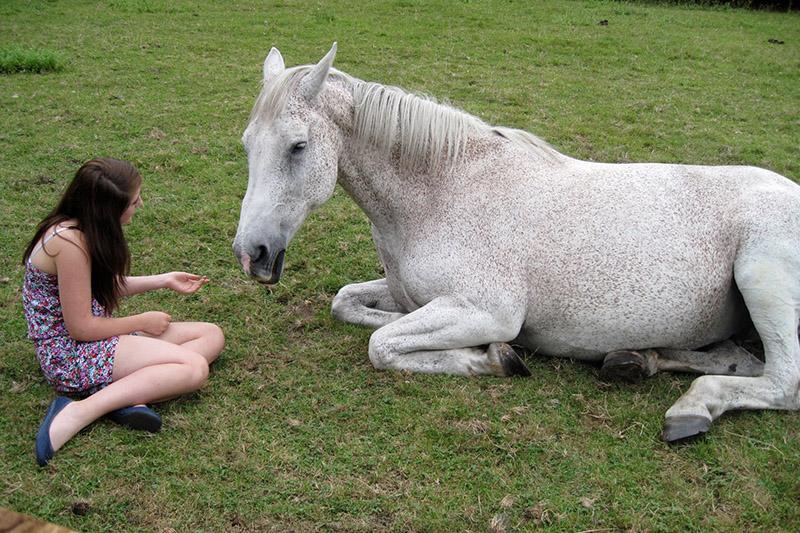 Horse Sense for Life