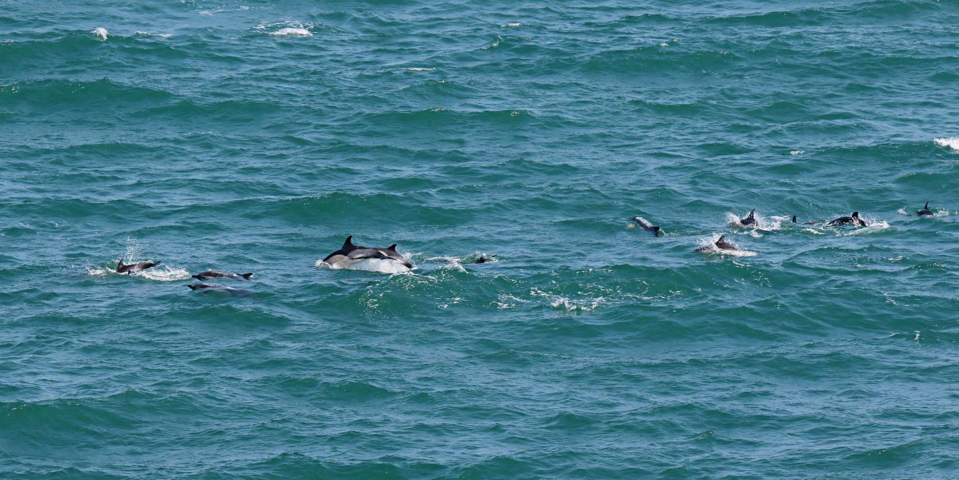 Sea Trust dolphins