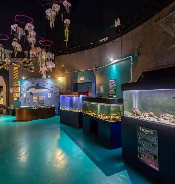 Sea Trust interior